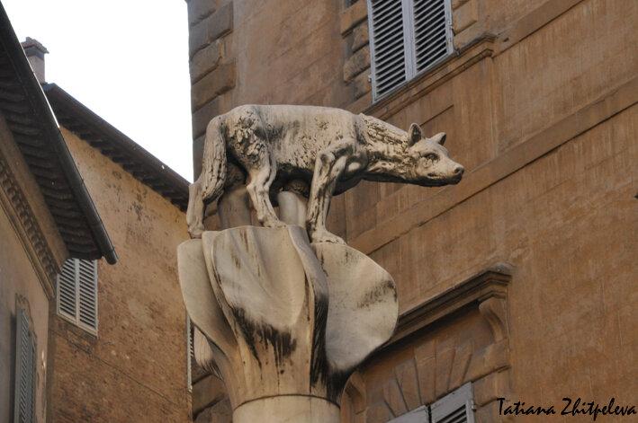 контрада Волчица
