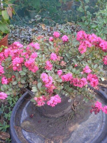 Мыльница цветы