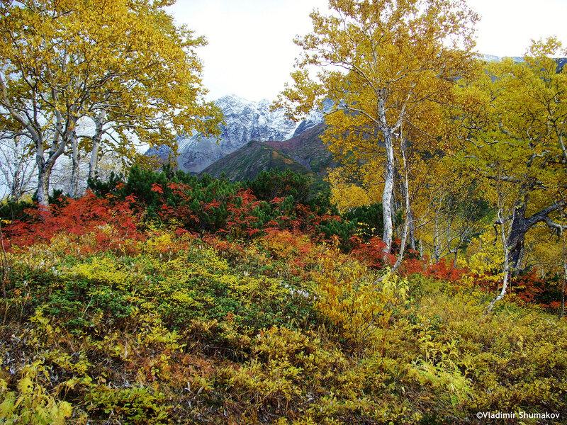 природа камчатки фото лес обладатель загородного дома