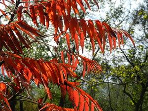 Осенний фотоконкурс 0_a7129_e6b0e5c9_M