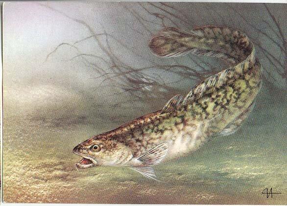 рыба толстолобик вкусная или нет