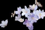 priss_spring_el40.png