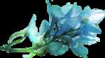 ldavi-shadowedflowers-delphinium7.png