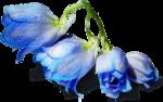 ldavi-shadowedflowers-delphinium11.png