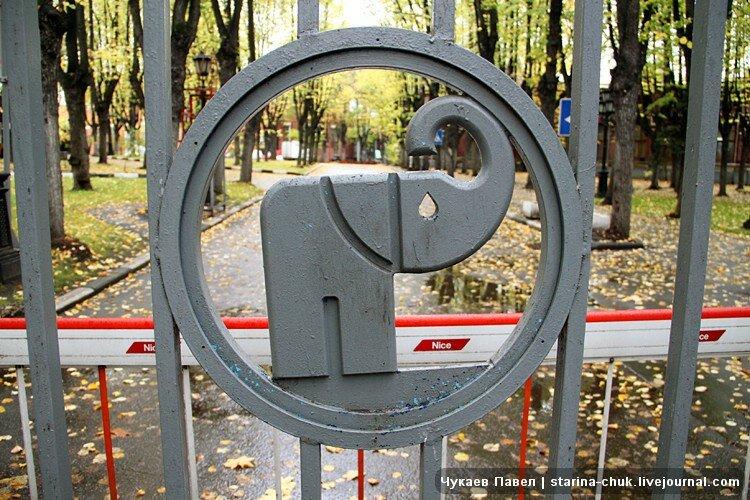 Сделала минет слону 24 фотография