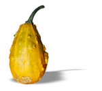 natali_halloween_pumpkin3-sh2.png