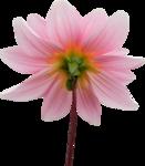 DBB_gardenflowers_el02.png
