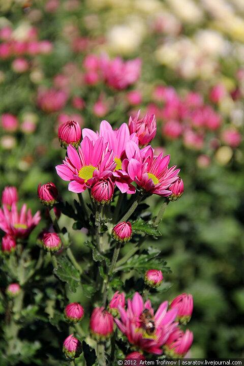 Хрупкие цветы