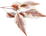 foliage3-(loucee).png