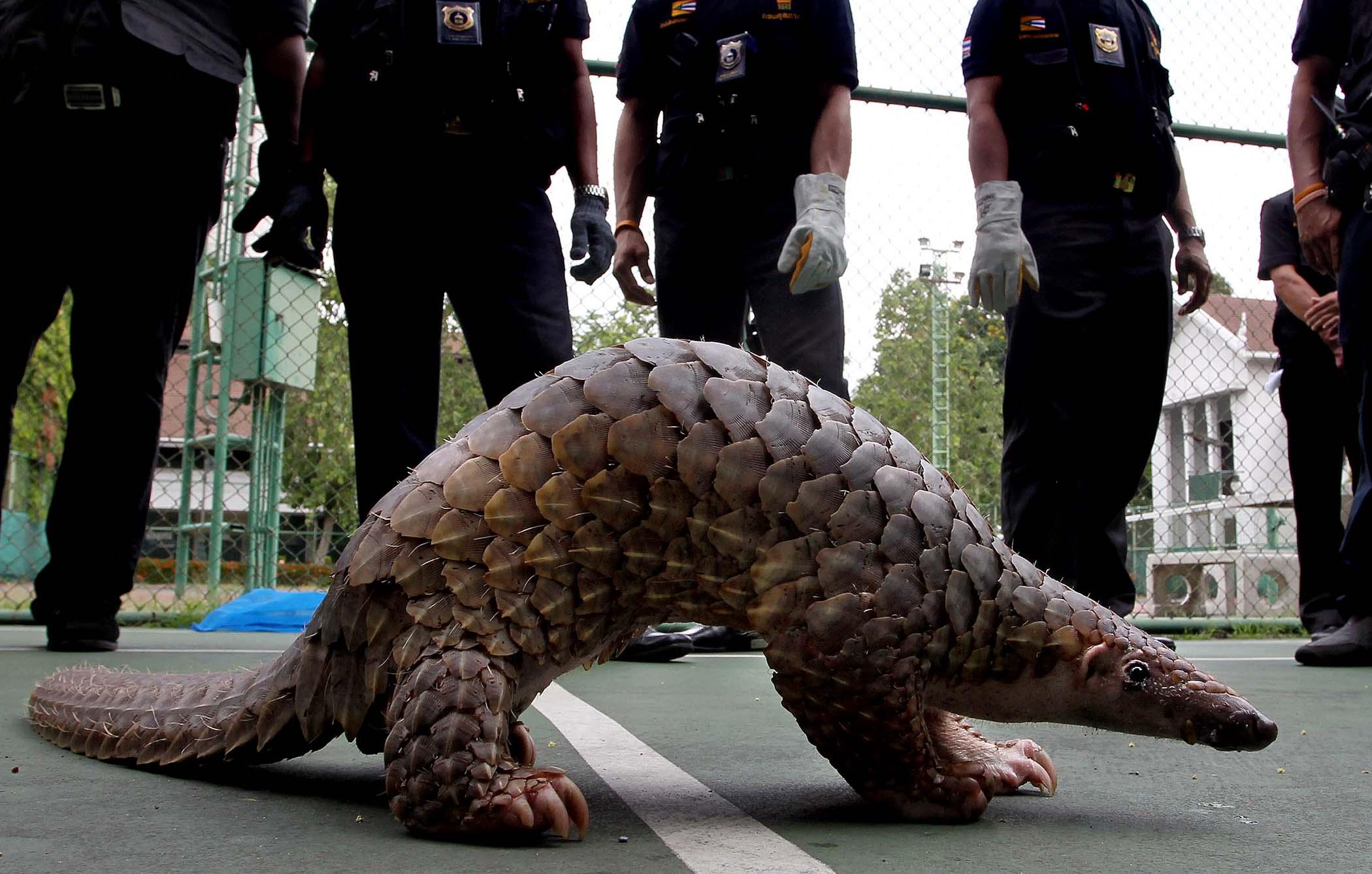Thailand Wilidlife Smuggling