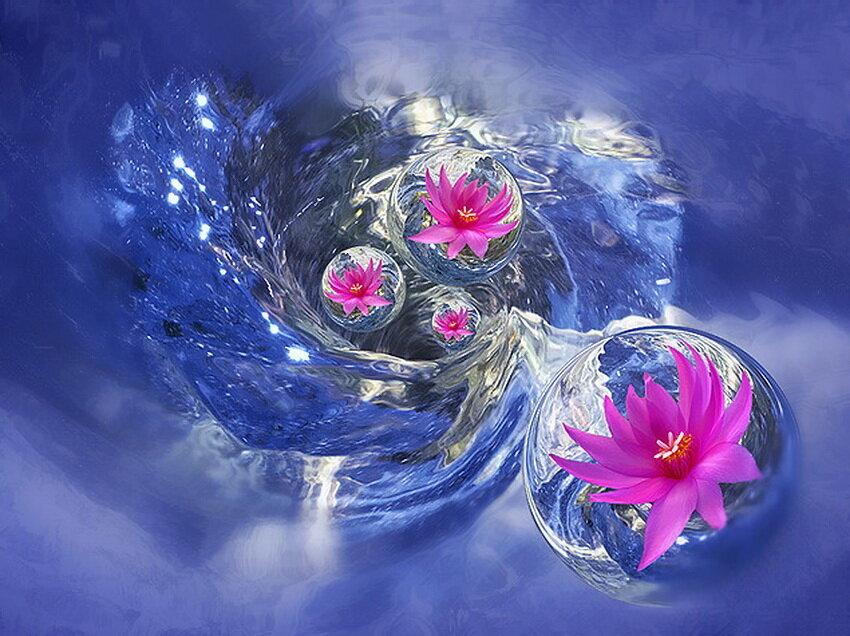 Открытка цветы в воде
