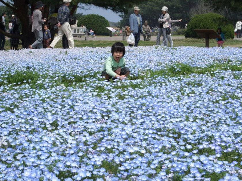 Живописный японский парк Хитати Кайхин 0 1422e1 4cfbea7d orig