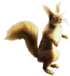 ldavi-scenesfms-squirrel2a.png