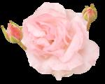 «victorian rose» 0_94a8e_b556e8a7_S