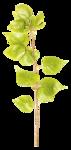 «victorian rose» 0_94aa6_61e62555_S