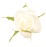 «victorian rose» 0_94aa8_cb0d6c7a_S
