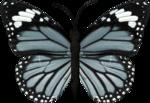 jss_bluejeans_butterfly blue 3.png