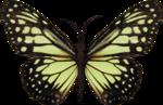 jss_bluejeans_butterfly green 1.png