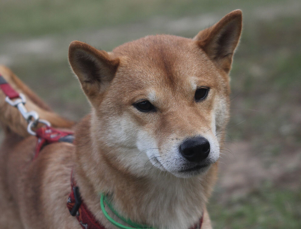 Недельные курсы повышения квалификации для собакообожак :-) Приглашаем всех!!! - Страница 3 0_7d734_ef254b6d_XXL