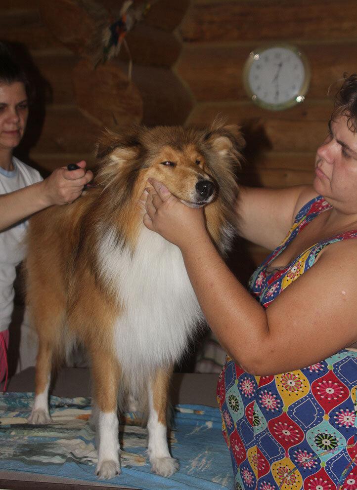 Недельные курсы повышения квалификации для собакообожак :-) Приглашаем всех!!! - Страница 2 0_7d75f_74aa7a2_XXL