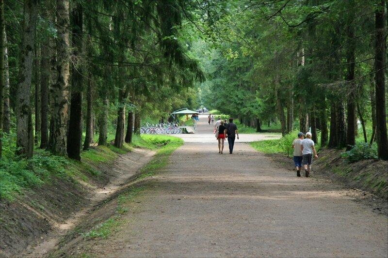 Павловский парк, Район Большая звезда, Аллея Молодого жениха
