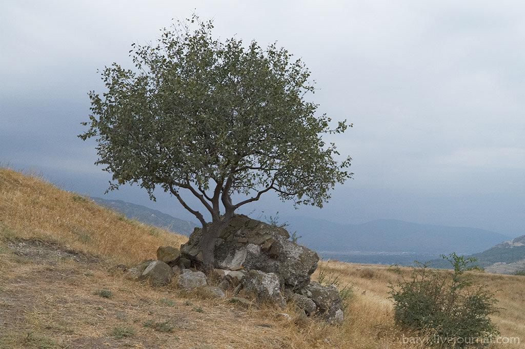 Деревце возле монастыря Джвари