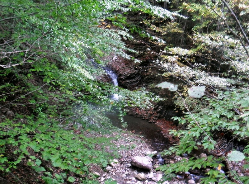 В лесу, в горах, сентябрь 2012