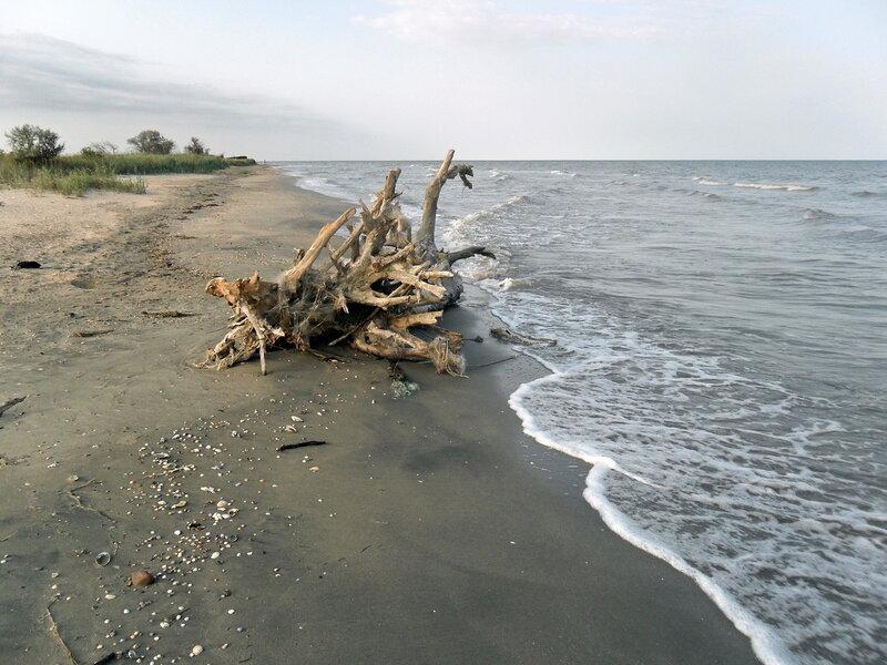 Утренний берег, лето