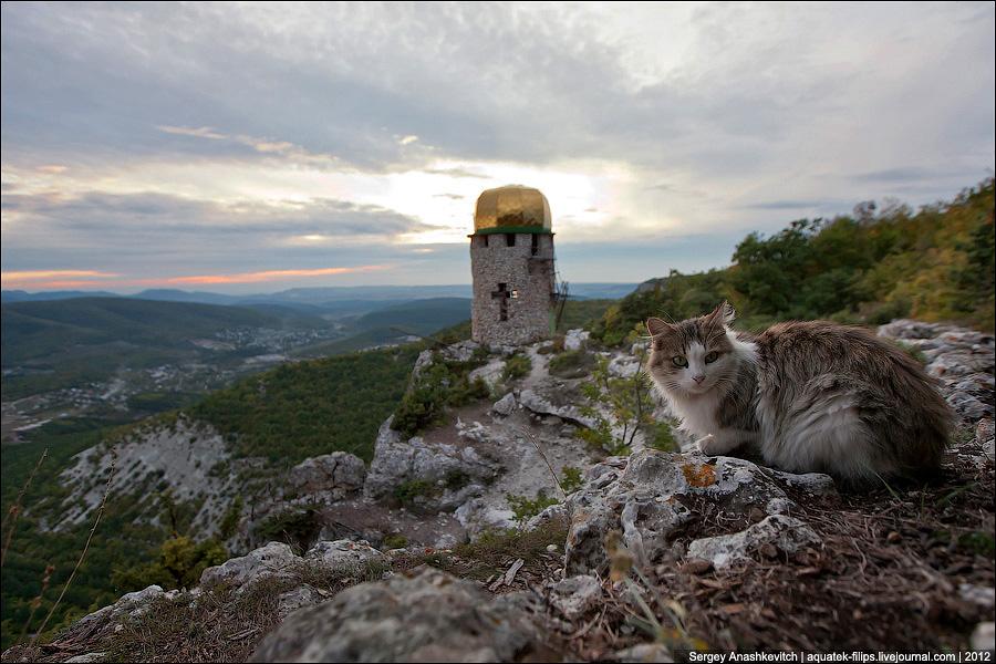 Шулданский кот