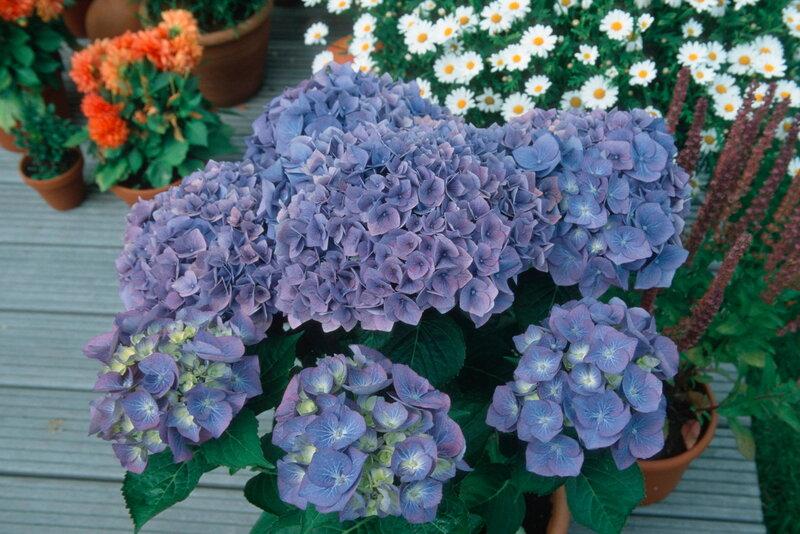 Домашние цветы в горшках картинки 2
