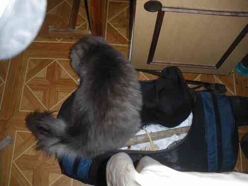 Фото 8. Кот Бетховен, косвенный виновник аварии, изучает сумку электрика.