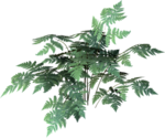 10mushroomfern3.png