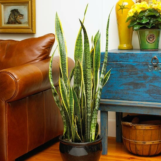 for Dekorative zimmerpflanzen