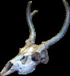 dus-intothedarkness-skull1.png