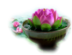 цветы (38).png