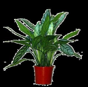 Домашние растения Комнатные растения Домашние цветы
