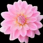 DBB_gardenflowers_el01.png
