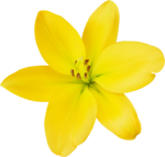 DBB_gardenflowers_el06.png