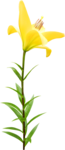 DBB_gardenflowers_el08.png