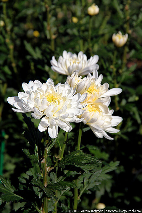 Наслаждение цветами Никитского ботанического сада