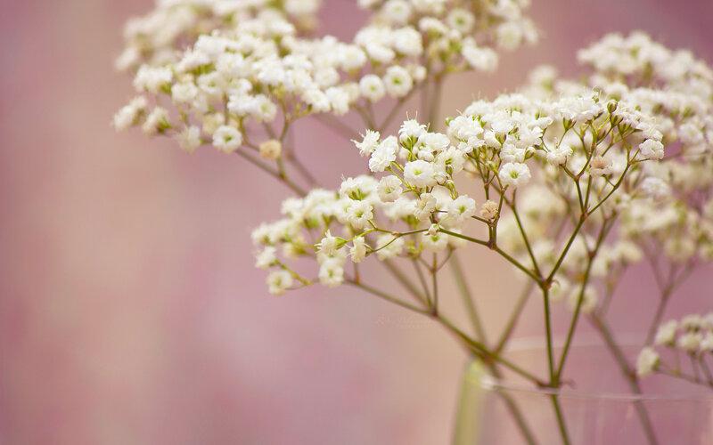 Мелкие цветы картинки 2