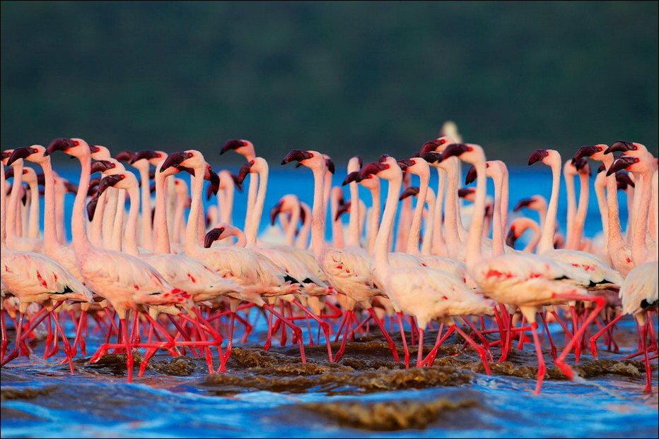 Озеро Накуру в Кении