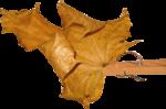 Autumn by Anna- Jolanta(95).png