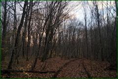 http://img-fotki.yandex.ru/get/6622/15842935.21b/0_daffb_ba8bf2e7_orig.png