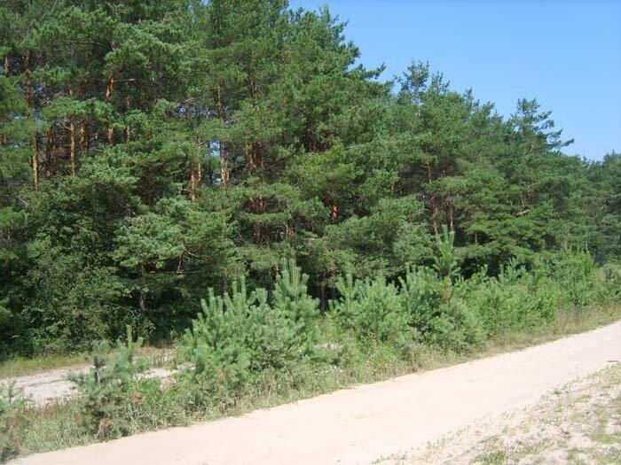 лес у Юркино