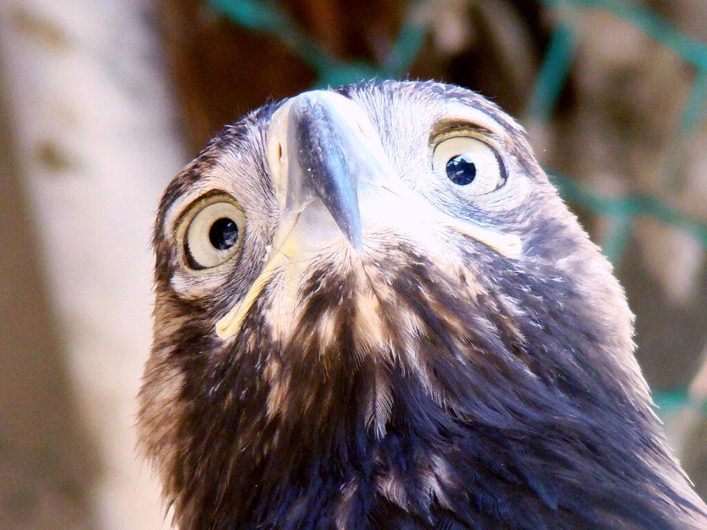 орел в ставропольском зоопарке
