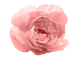 moosscrapsdesigns_floralpleasure (31).png