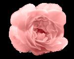 moosscrapsdesigns_floralpleasure (31).png