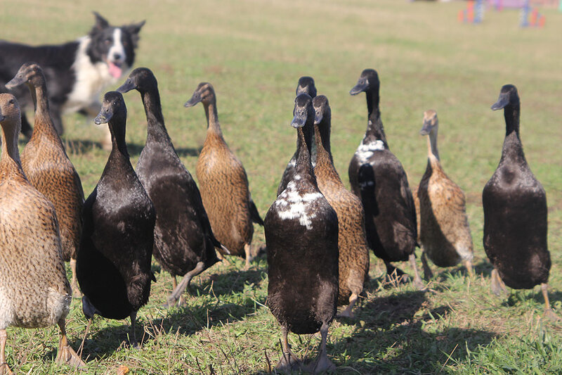 Недельные курсы повышения квалификации для собакообожак :-) Приглашаем всех!!! - Страница 2 0_7daf5_2a0ee8cc_XL