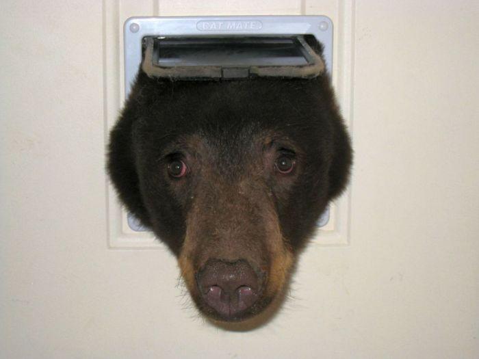 Американец обнаружил медведя, застрявшего в кошачьей двери